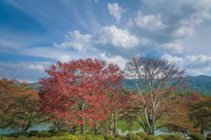 荒神山公園にて。秋空と紅葉した木々にとても癒されます。