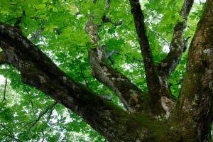 自然の豊かさが感じられる森の木々。