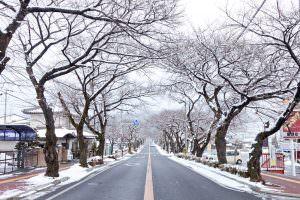 桜並木がじっと春の訪れを待ち焦がれています。