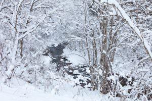 横川の蛇石にも冬が来ました。動物たちがダンスをしたような足跡もちらほら。