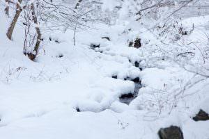 山のきれいな水が降り積もった雪の中を楽しそうに音を奏でながら流れています。